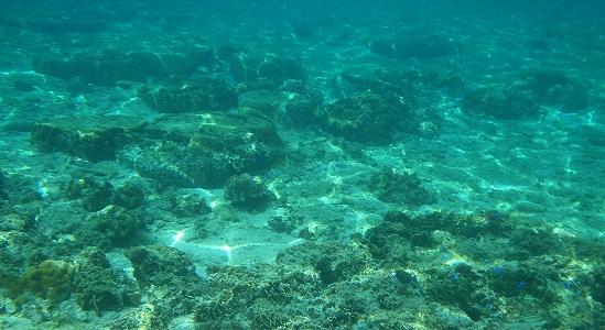冬の沖縄の海の様子